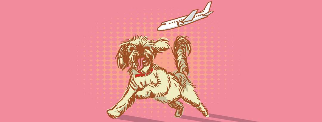 a small fluffy dog leaps to catch an airplane