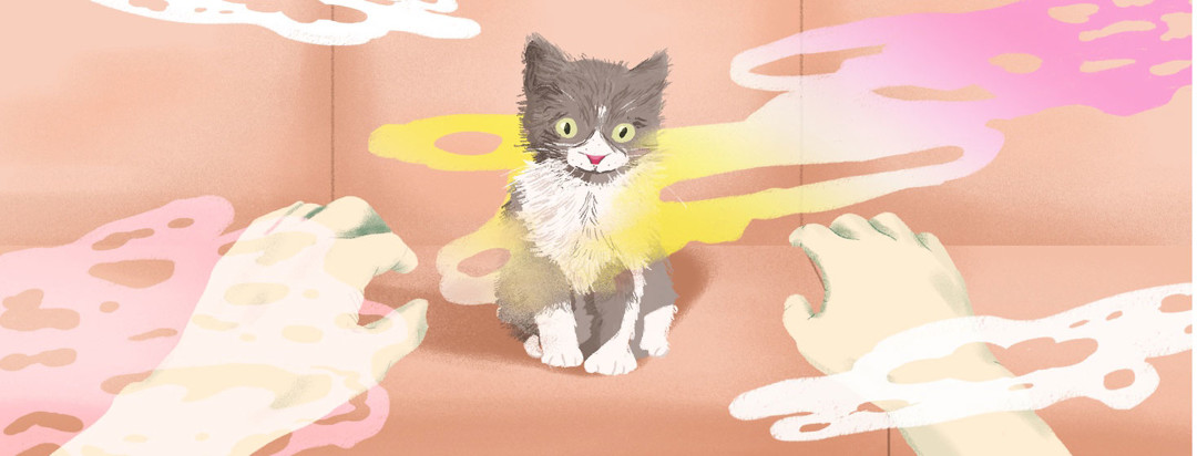 a kitten surrounded by floating clouds of dander while hands reach for it